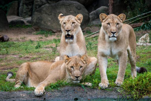 Virtual: Houston Zoo Virtual Tour