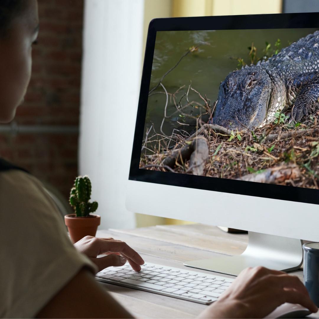 Virtual: Radical Reptiles
